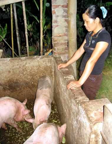 Được Hội Phụ nữ phường Sông Cầu tạo điều kiện cho vay vốn, hội viên N.T.T đã làm được nhà mới và phát triển chăn nuôi.